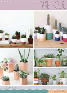 love print studio blog: Take four...creative ways with succulents