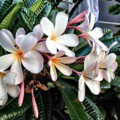 City of Honolulu itt: Hawaii