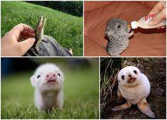 crias adorables de animales - Buscar con Google
