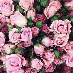 sunshine makes me bloom Love Rose, My Flower, Pretty Flowers, Pink Roses, Pink Flowers, Flowers Nature, Bloom, No Rain, Beautiful Roses
