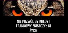 Masz kredyt we Franku szwajcarskim? Kawaii, Animals, Animales, Animaux, Animal, Animais