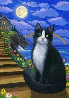 """Tuxedo Cat At Rainbow Cottage"" <3"