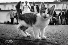 10 ocasiones en las que un gato estropeó una foto