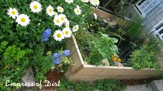 How to build a small garden pond in a raised bed - great idea if you can't dig the soil or want easy access to your water feature. Love Garden, Garden Pond, Garden Beds, Big Leaf Plants, Pond Plants, Water Plants, Digging A Pond, Container Pond, Container Gardening