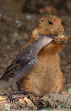 Sharing - AMAZING & EVER SO SWEET!!