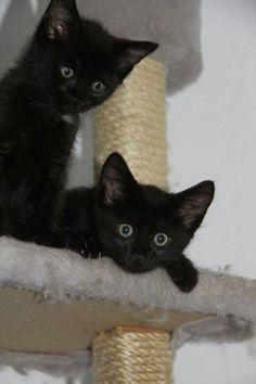 Αααααα♥Two little cuties! Black Cats Bring Good Luck <3 #catandkitten