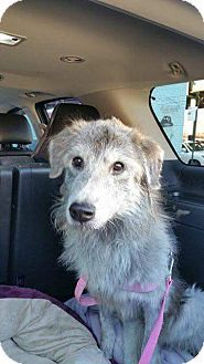 New York, NY - RESCUE DOGS ROCK NYC, Shepherd (Unknown Type) Mix. Meet MONTY, NYC ACC SURVIVOR, a dog for adoption. http://www.adoptapet.com/pet/14092836-new-york-new-york-shepherd-unknown-type-mix