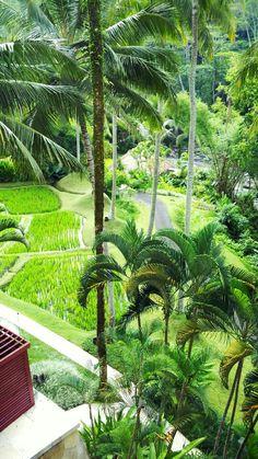 View from lobby - Four Seasons Hotel & Resort at Sayan, Ubud - Bali