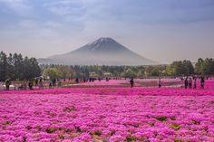 a-primavera-colorida-no-japao-blog-usenatureza