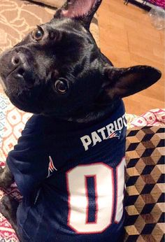 #Petriots Boxer Dogs, Doggies, Sports Fanatics, Little Pets, Atlanta Falcons, Houston Tx, Anarchy, Four Legged, New England Patriots