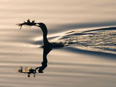 Cormorant with its catch (I LOVE the reflection!).