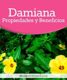 #Damiana - Propiedades y Beneficios #PlantasMedicinales