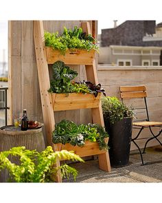 Williams-Sonoma Farmer D 3-Tier Vertical Wall Garden from Williams-Sonoma | BHG.com Shop
