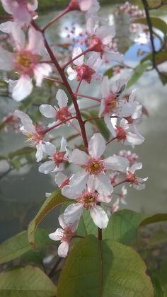 "Kevät ©Taru: ""Kesä saapuu."""