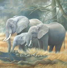 Laura Regan was born in Canada, wildlife paintings and children's books