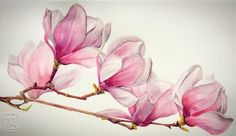 MAGNOLIA Watercolor LorenaFröhlich Mohr