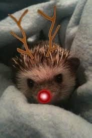 Image result for christmas hedgehogs