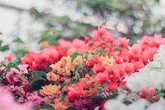 Bush of Bougainvillea flower by Nuchylee Photo on Creative Market