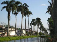 nieuw nickerie suriname   Foto do dia: Nieuw Nickerie – Suriname