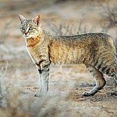 Chytrý zákusok s makom (fotorecept) - recept Pavlova, Cats, Animals, Gatos, Animales, Animaux, Animal, Cat, Animais