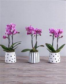 Pink Midi Phalaenopsis Orchid Pot!