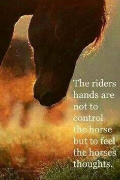 The riders hands are not to control the horse but to feel the horses thoughts........
