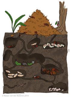 Afbeeldingsresultaat voor mierennest doorsnede