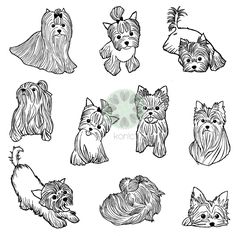 yorkies york yorkie yorkshire terrier terriers Illustrations for konic.pl