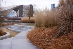 Olympic Park Asia Garden home page | Nigel Dunnett