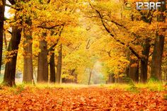 Beautiful autumn forest in national park De hoge Veluwe in the Netherlands brought to you by Dennis Van De Water. #123rf #Free #Autumn