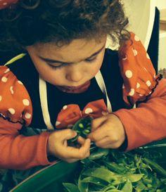 #shellingpeas #montessori #toddlereducationservices  http://toddlereducationservices.com.au/shop/