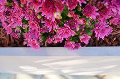 By Slowgarden : http://www.slowgarden.fr  #contenants,rose,terrasse marseille,jardin,piscines