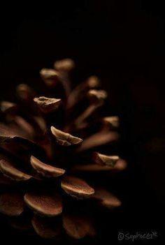 ❧ Couleur : Les bruns ❧