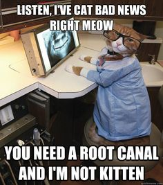 Listen, I've cat bad news right meow you need a root canal and I'm not kitten