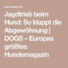 Jagdtrieb beim Hund: So klappt die Abgewöhnung | DOGS – Europas größtes Hundemagazin