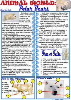 Animal World: Polar Bears