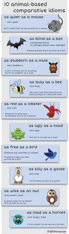 10 comparative idioms (animals) #idioms #ESL #English