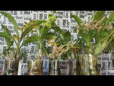 Flora, Alice, Vase, Make It Yourself, Pets, Bananas, Youtube, Gardening, Orchids In Water