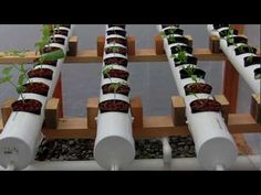 2010 Hydroponic green house Update # 1