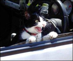 Cats: | The Difference Between Dogs And Cats  going on a car ride