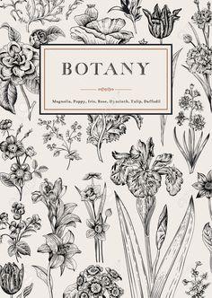 classic botanical drawing - Google zoeken