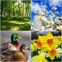 Prolećne slike sa interneta