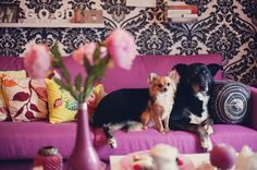 interior Design with cute puppies pictures