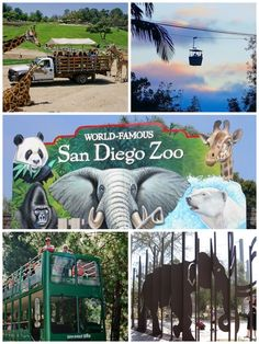San Diego, California Zoo.  It is HUGE. Glad we took the tour by bus!