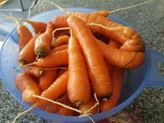 Rezept für Karottenkuchen ohne Mehl - glutenfrei und lactosefrei Afternoon Tea, Zucchini, Carrots, Paleo, Food And Drink, Low Carb, Gluten Free, Snacks, Vegan