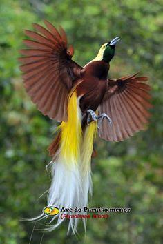 Conheça aves e animais existente em nosso planeta, e que, na maioria não são conhecidos!