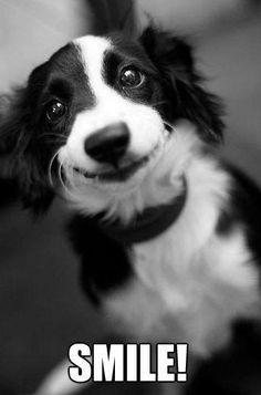 Awwwww Duke... :( - ✯ www.pinterest.com/WhoLoves/Smiles ✯ #smile - Visit http://youtu.be/URiNhSMmfwY