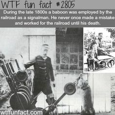 NEVER once made a mistake - WOW! ... WTF! Weird fun facts