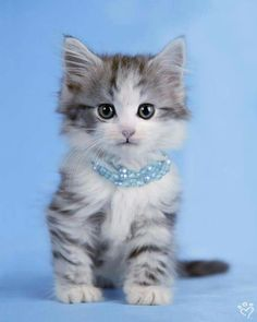 cute Kitten - animal babies