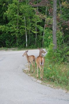 MacGregor Point Provincial Park- We found deer All About Canada, Canadian Wildlife, The Great Outdoors, Ontario, Deer, Beautiful Places, Places To Visit, Camping, Cook